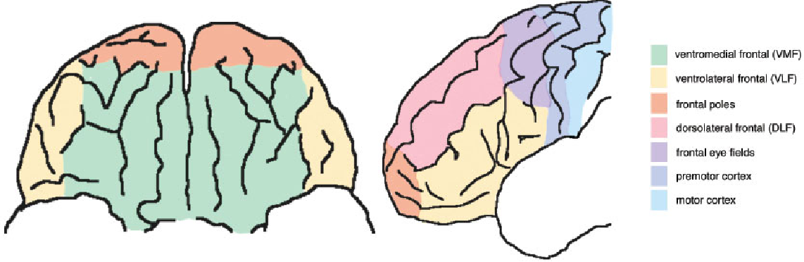 Figure 1: Subdivisions of the prefrontal cortex (PFC).The PFC is composed of all regions anterior to the frontal eye fields, namely the ventromedial, ventrolateral and dorsolateral frontal regions and the frontal poles. Reproduced with permission from Fellows (2004).