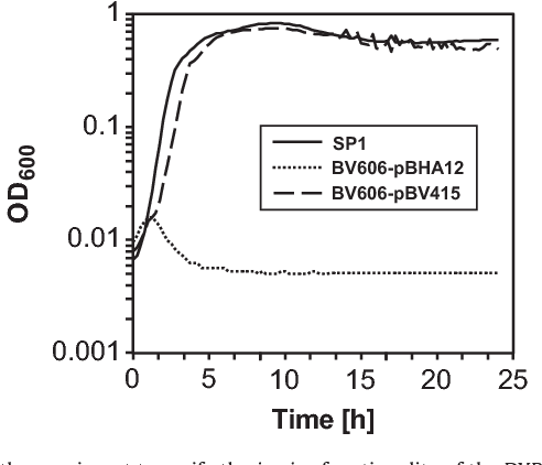 Fig. 3. Growth experiment to verify the in vivo functionality of the DXP-dependent vitamin B6 pathway in B. subtilis. Bacteria were grown overnight in LB medium supplemented with 0.2 mM PL and the pre-cultures were used to inoculate fresh LB medium. SP1, wild type; BV606-pBHA12, (ΔpdxST SC1 SC2n); BV606-pBV415, (ΔpdxST pdxH SC1 SC2n). OD600, optical density at 600 nm.