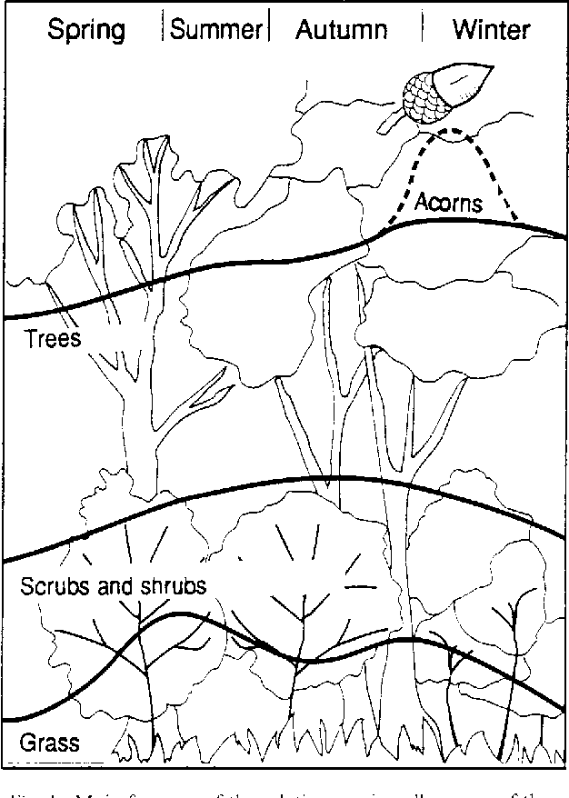 Figure 1 From Old Holm Oak Coppices New Sylvopastoral