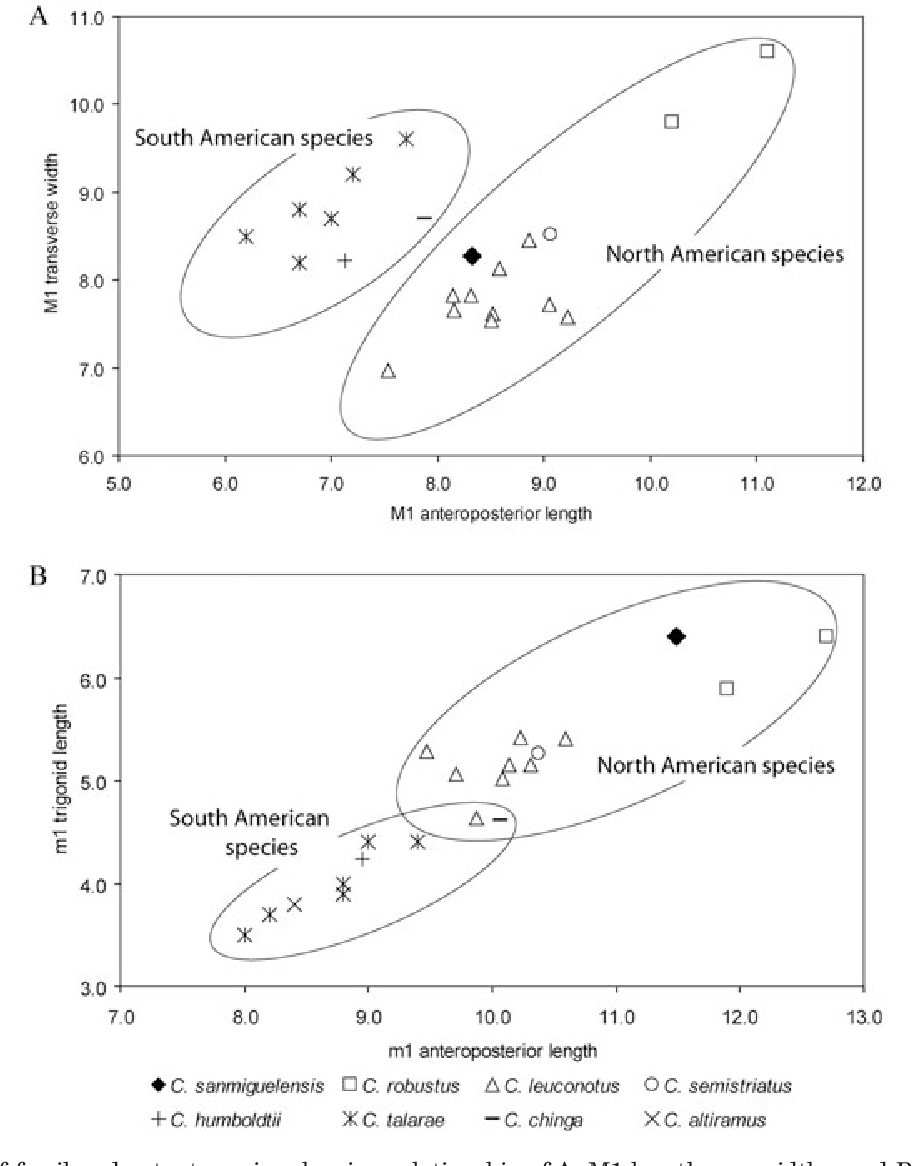 figure 11  plots of fossil and extant species showing relationship of a, m1  lengths
