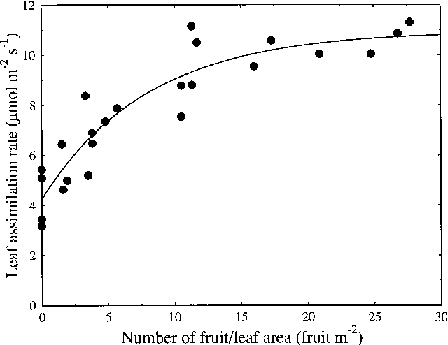 Figure 3. Relationship between mean leaf assimilation rate at 83 and 94 days after full bloom and crop load of individual 'Braeburn'/M.26 apple trees. The fitted curve, y = 10.96 − 6.72e−0.125 x, accounted for 85% of the variance, where y = mean leaf assimilation rate and x = fruit number per unit leaf area.