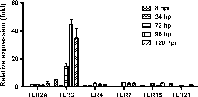 Fig. 1 Relative expression of Toll-like receptors in RB1B-infected CEF cells. Expression of TLR2A, TLR3, TLR4, TLR7, TLR15 and TLR21 genes in CEF cells at 8, 24, 72, 96 and 120 hours after infection with strain RB1B