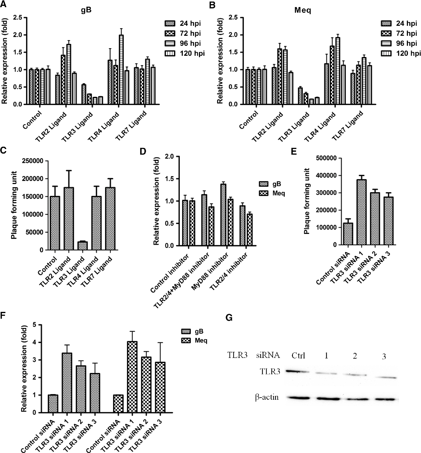 Fig. 2 Influence of TLR3 on MDV infection and replication. A: Expression of gB in CEF cells stimulated with TLR ligands at 24, 72, 96 and 120 hours after infection with strain RB1B. B: Expression of Meq in CEF cells stimulated with TLR ligands at 24, 72, 96 and 120 hours after infection with strain RB1B. C: Plaque-forming units of RB1B in unstimulated CEF cells. D: Plaque-forming units of RB1B in CEF cells stimulated with TLR ligands. E: Plaque-forming