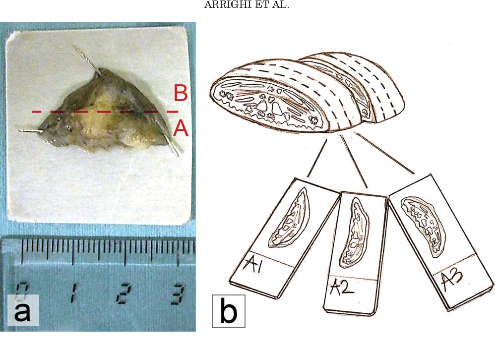Figure 1 from The anatomy of the dog soft palate. I. Histological ...