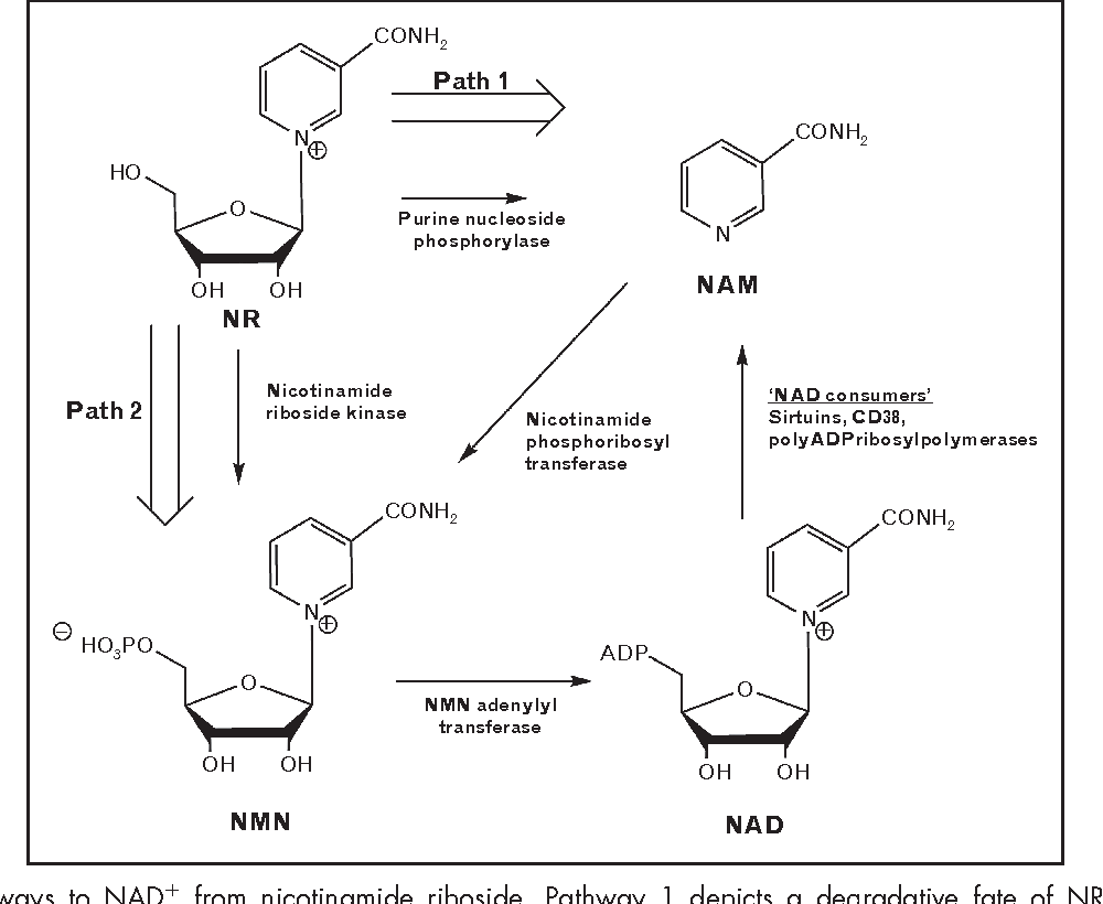 Figure 1 from Nicotinamide riboside, a trace nutrient in