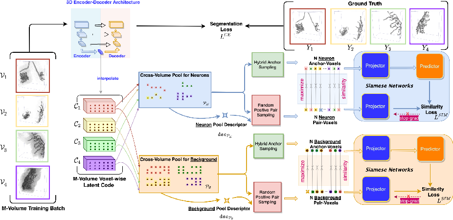 Figure 1 for Voxel-wise Cross-Volume Representation Learning for 3D Neuron Reconstruction