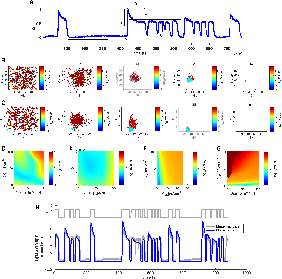 Figure 1 for Searching for Biophysically Realistic Parameters for Dynamic Neuron Models by Genetic Algorithms from Calcium Imaging Recording
