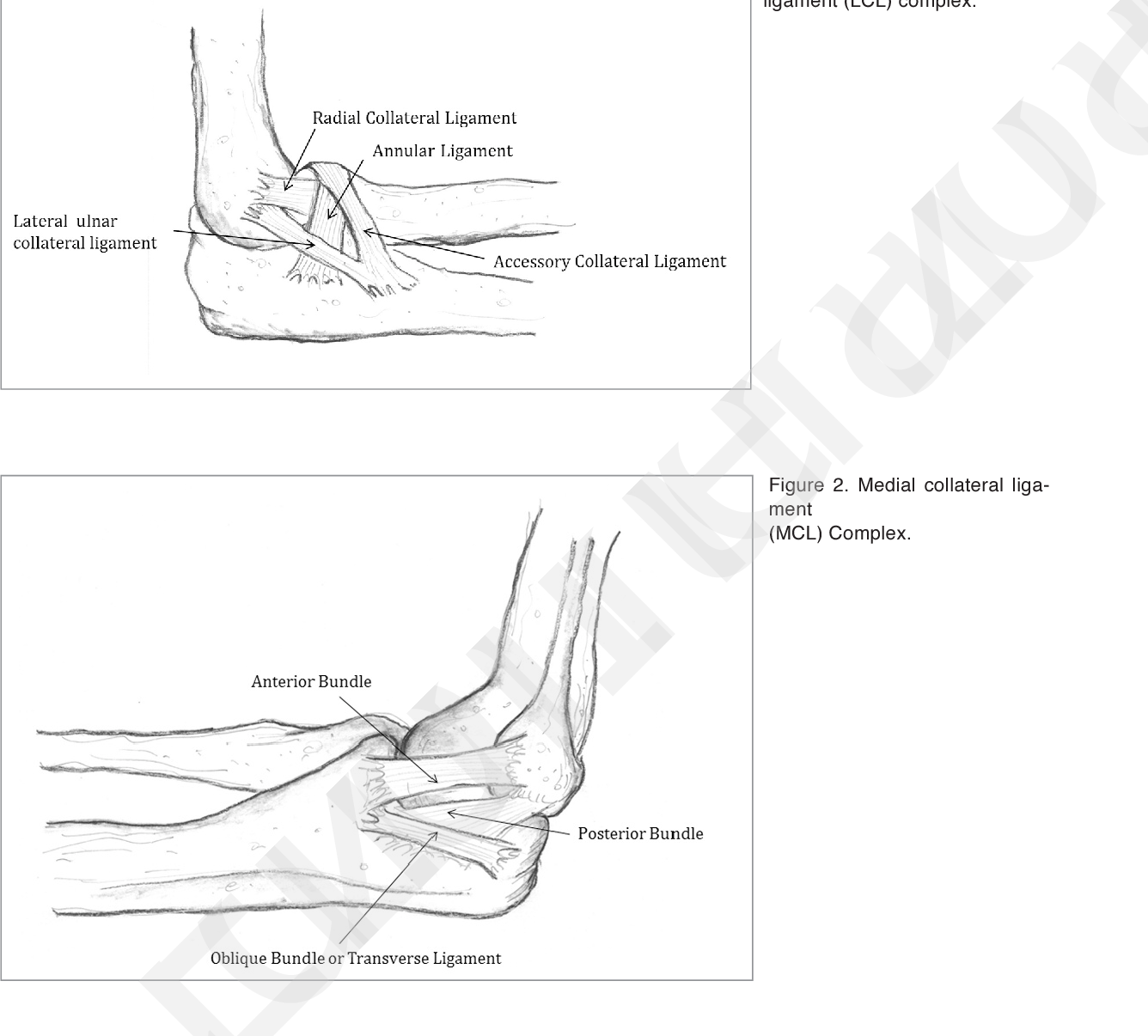 Figure 2 From Medial Elbow Injury In Young Throwing Athletes