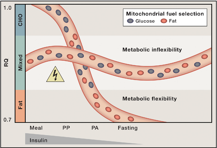 Figure 2. Mitochondrial Indecision Results in Metabolic Inflexibility