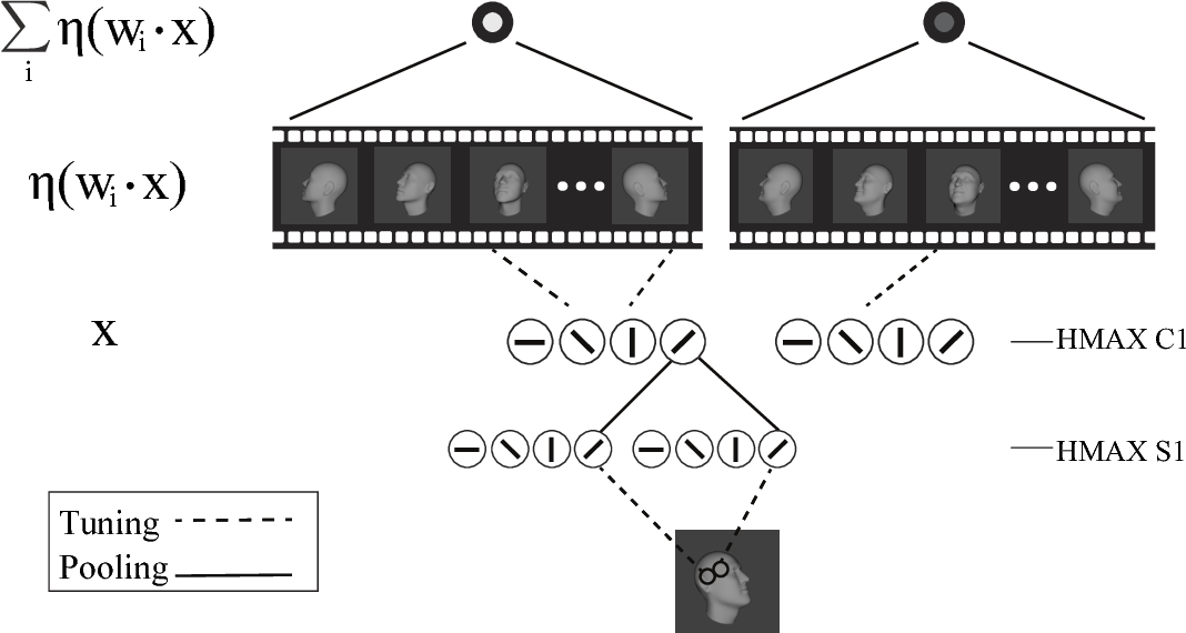 Figure 2 for View-tolerant face recognition and Hebbian learning imply mirror-symmetric neural tuning to head orientation