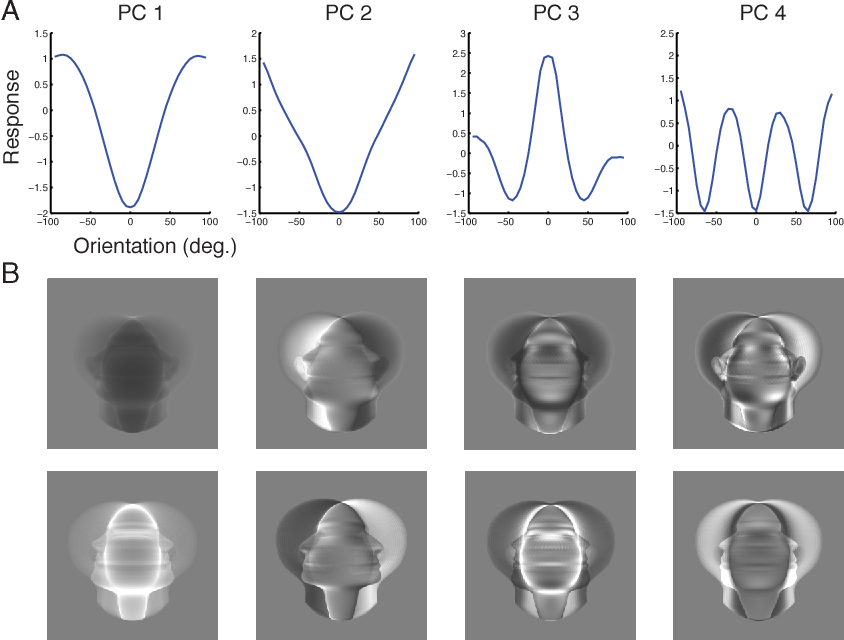 Figure 4 for View-tolerant face recognition and Hebbian learning imply mirror-symmetric neural tuning to head orientation