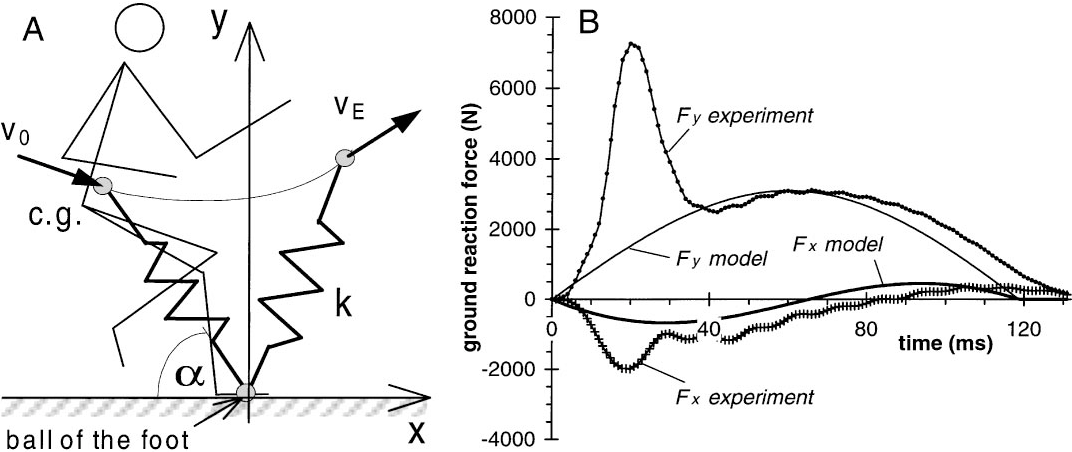Figure 4 From Dynamics Of The Long Jump Semantic Scholar