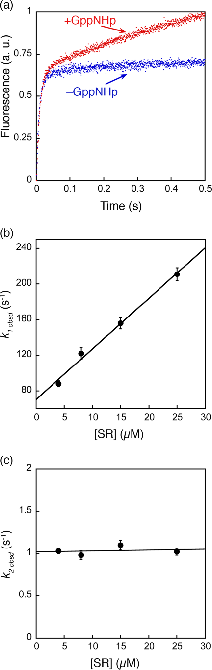 Figure 3. Formation of an SRP•SR complex in the presence of GppNHp involves two discrete steps