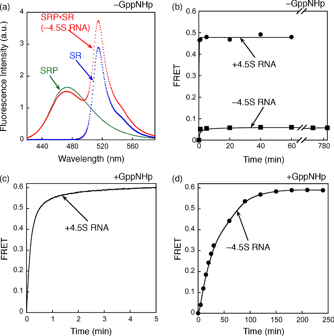 Figure 4. The GTP-independent complex is stabilized by the 4.5S RNA