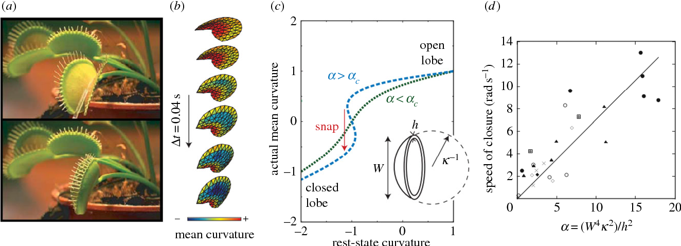 Figure 2 from Fast nastic motion of plants and bioinspired ...