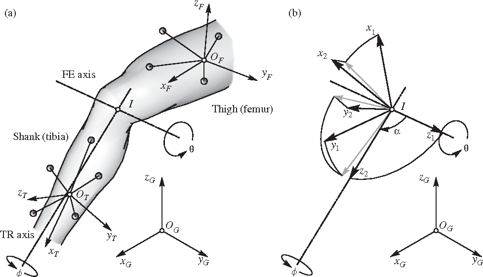 Reconstructing The Knee Joint Mechanism From Kinematic Data