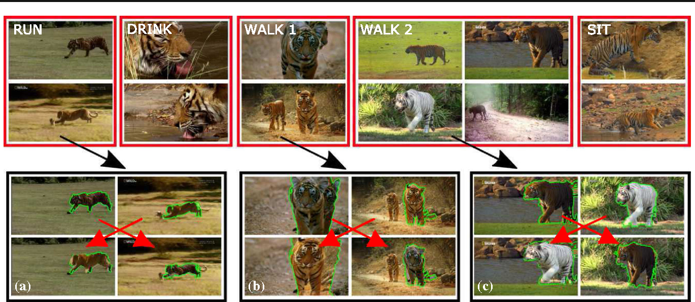 Fig. 1 Output of our system. Top: examples of the behaviors discovered automatically from a collection of unstructured videos of an object class (tiger). From left to it right running, drinking, two different types of walking, and sitting down. Our system uses a new descriptor for articulated motion that analyzes the displacement of pairs of trajectories. It is fully automatic: the class label is the only supervision we require. Videos with more behaviors are available at Del Pero et al. (2015b).