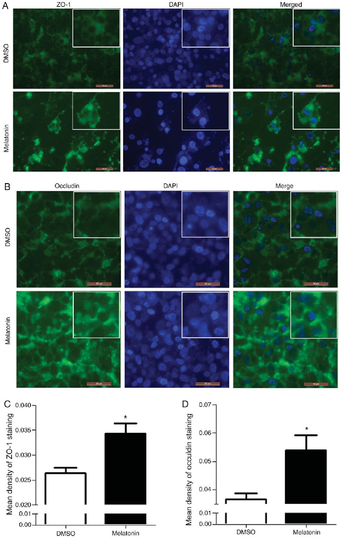 Pdf Melatonin Inhibits Colon Cancer Rko Cell Migration By Downregulating Rho Associated Protein Kinase Expression Via The P38 Mapk Signaling Pathway Semantic Scholar