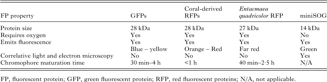 Table 1. Comparison of commonly used genetically encodable GFP and GFP-like tags with the novel miniSOG