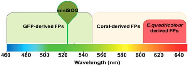 Fig. 1. Emission spectrum range of FPs. FPs emit at different wavelengths depending on the FP family. Abbreviation: FP, fluorescent protein.