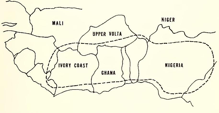 Figure 4 from TROPICAL YAMS AND THEIR POTENTIAL Part 4   Dioscorea