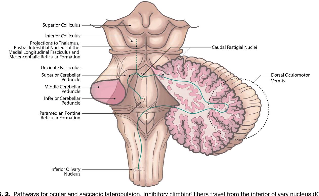Figure 2 from Cerebellar Control of Eye Movements. - Semantic Scholar