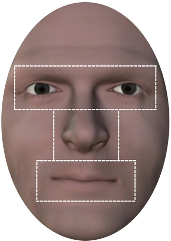 FIGURE 2 | Areas of interest. Illustration of internal region of the face comprising the areas of interest for the facial features eyes, nose, mouth.