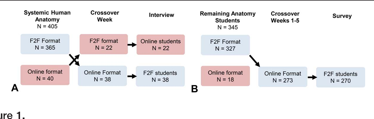 Mixed Methods Student Evaluation Of An Online Systemic Human Anatomy