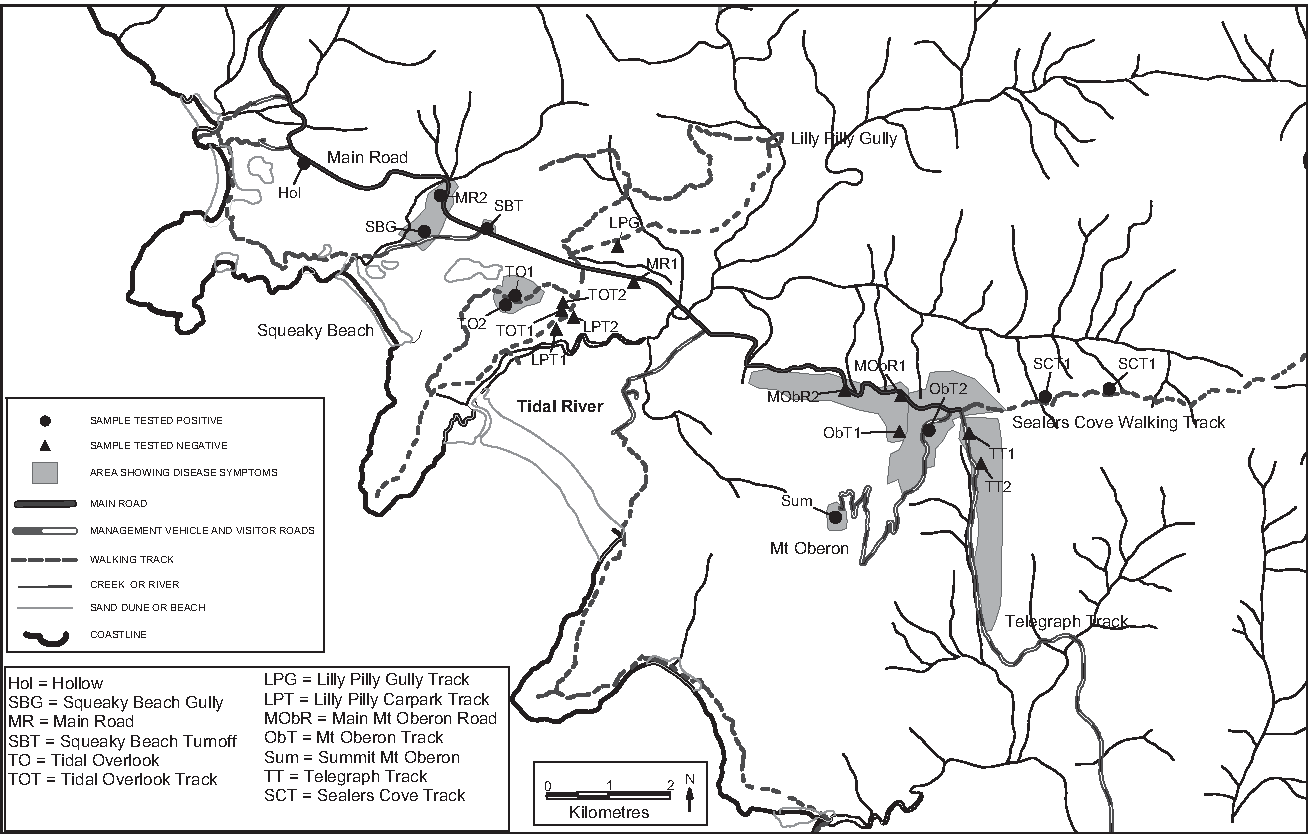 Fig. 3. Detailed map of the central region around the Tidal River area showing sampling sites and areas with disease symptoms (shading). Main roads, tracks and watercourses are shown.