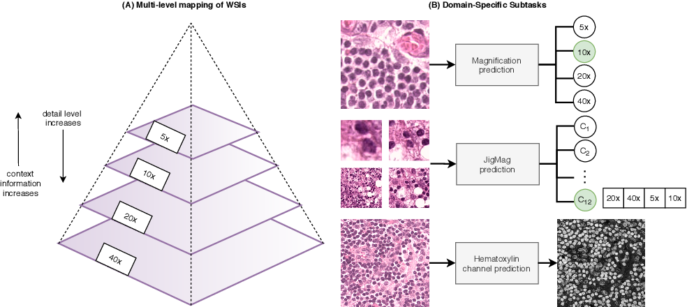 Figure 2 for Self-Path: Self-supervision for Classification of Pathology Images with Limited Annotations