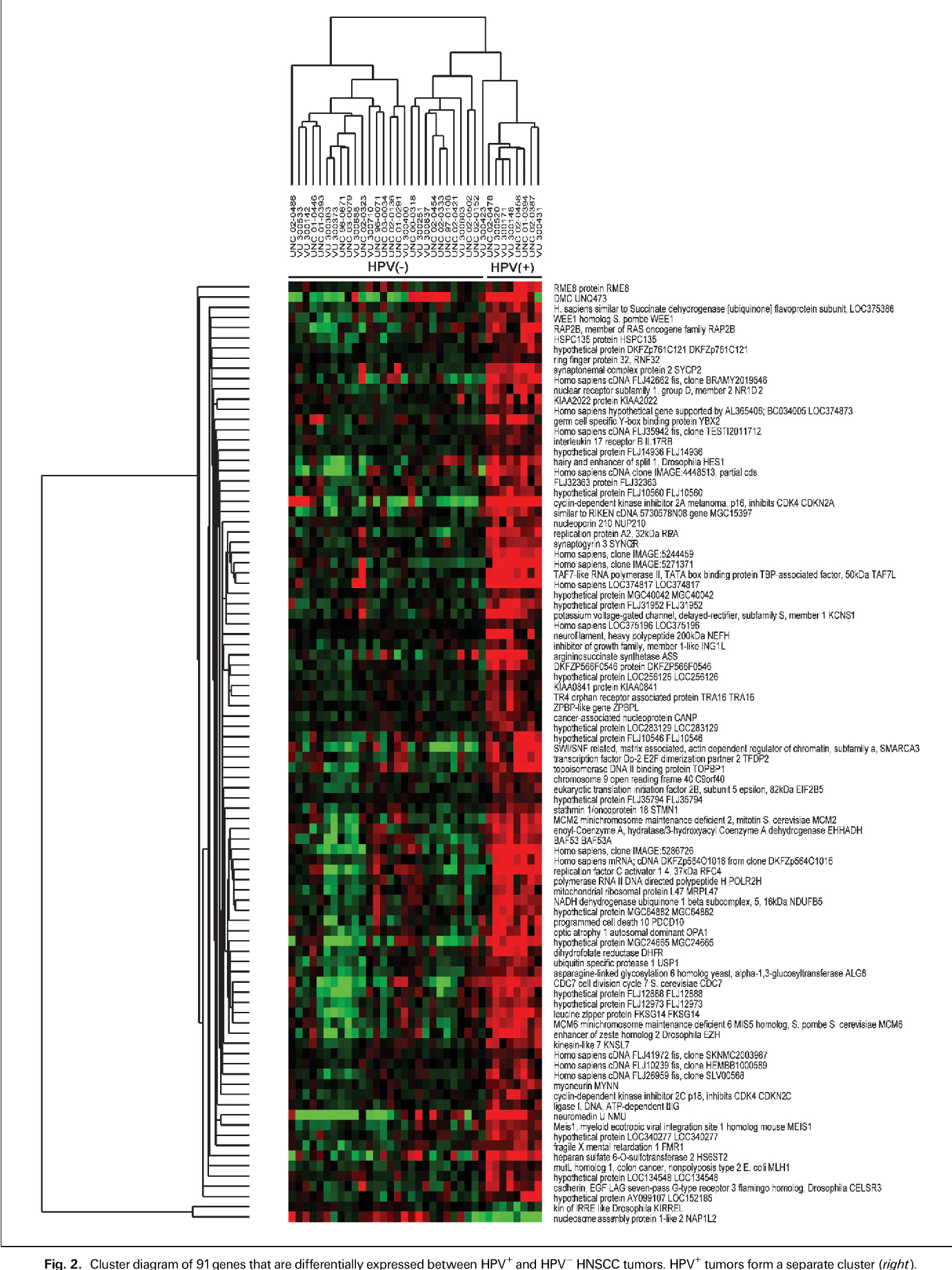 Figure 2 from Gene expression differences associated with