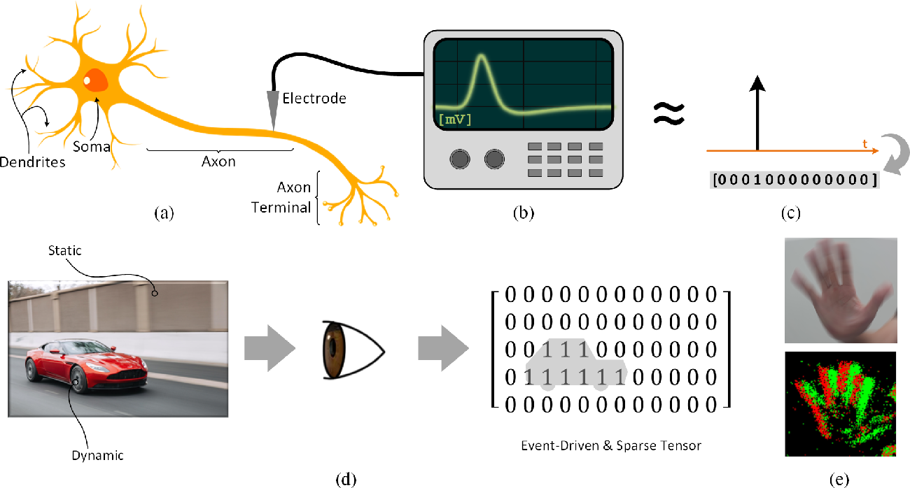 Figure 3 for Training Spiking Neural Networks Using Lessons From Deep Learning