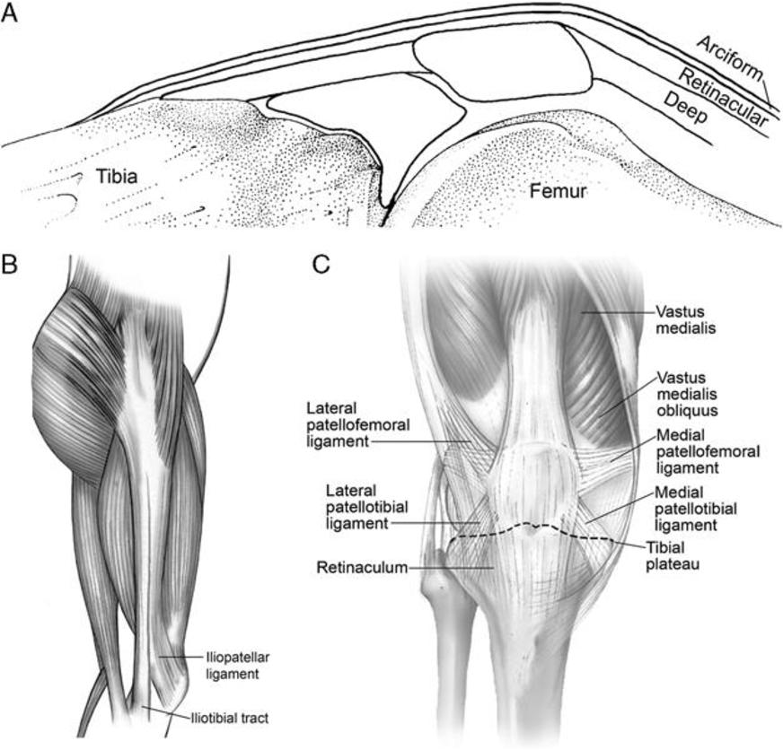 Fantastisch Laterale Retinaculum Zeitgenössisch - Anatomie und ...