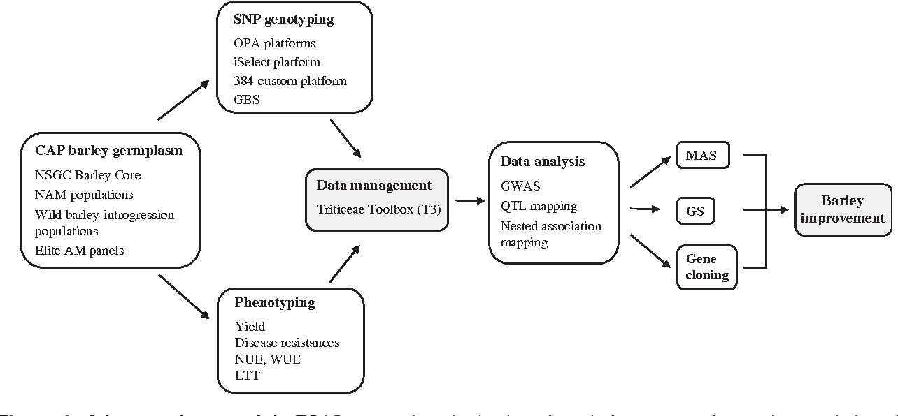 Figure 1 From Barley Genetic Variation Implications For Crop