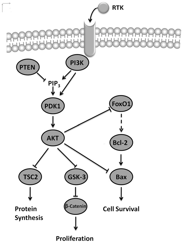 Changes Of Pi3kaktbcl2 Signaling Proteins In Congenital Giant Nevi