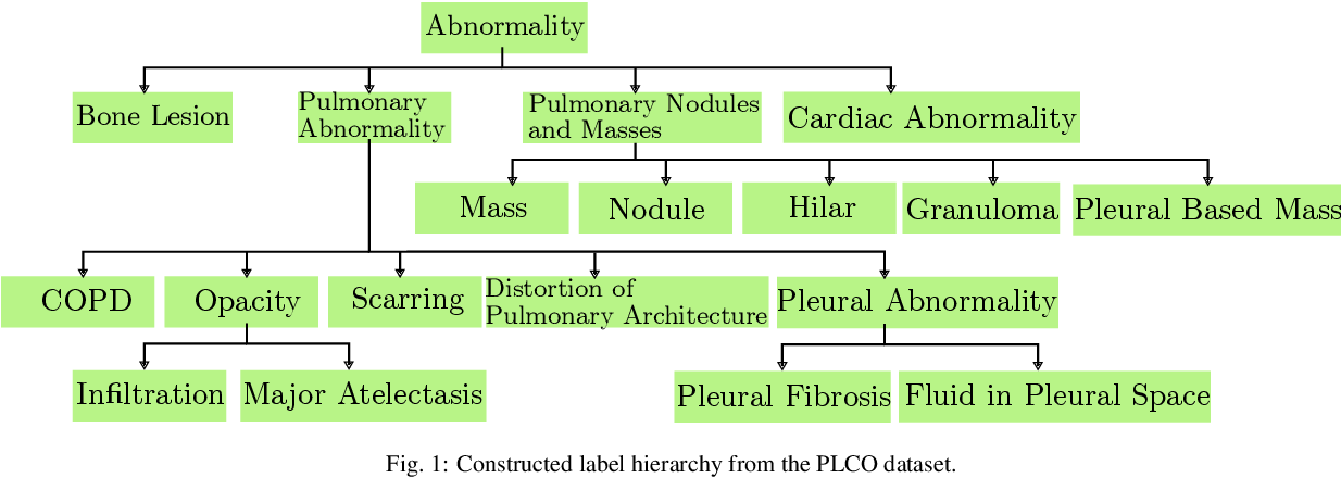 Figure 1 for Deep Hiearchical Multi-Label Classification Applied to Chest X-Ray Abnormality Taxonomies