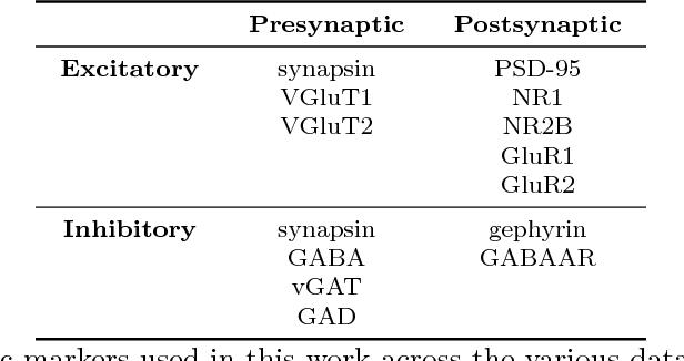 Figure 2 for Probabilistic Fluorescence-Based Synapse Detection