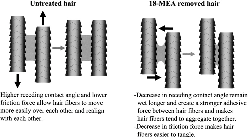 Figure 11 From 18 Mea And Hair Appearance Semantic Scholar