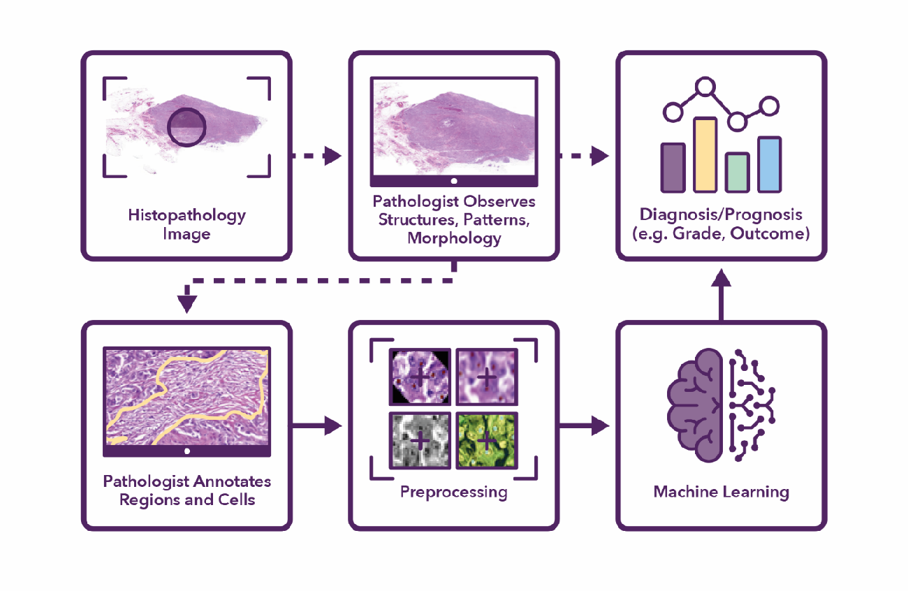 Figure 1 for Semantic annotation for computational pathology: Multidisciplinary experience and best practice recommendations