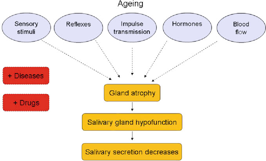 saliva and the control of its secretion semantic scholar