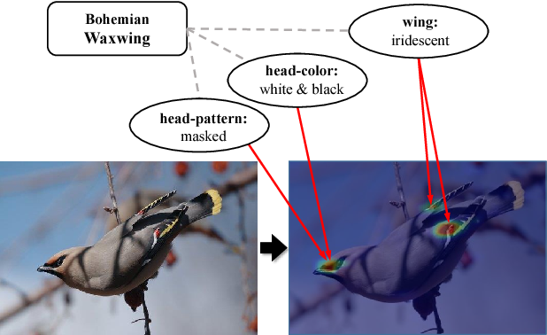 Figure 1 for Knowledge-Embedded Representation Learning for Fine-Grained Image Recognition