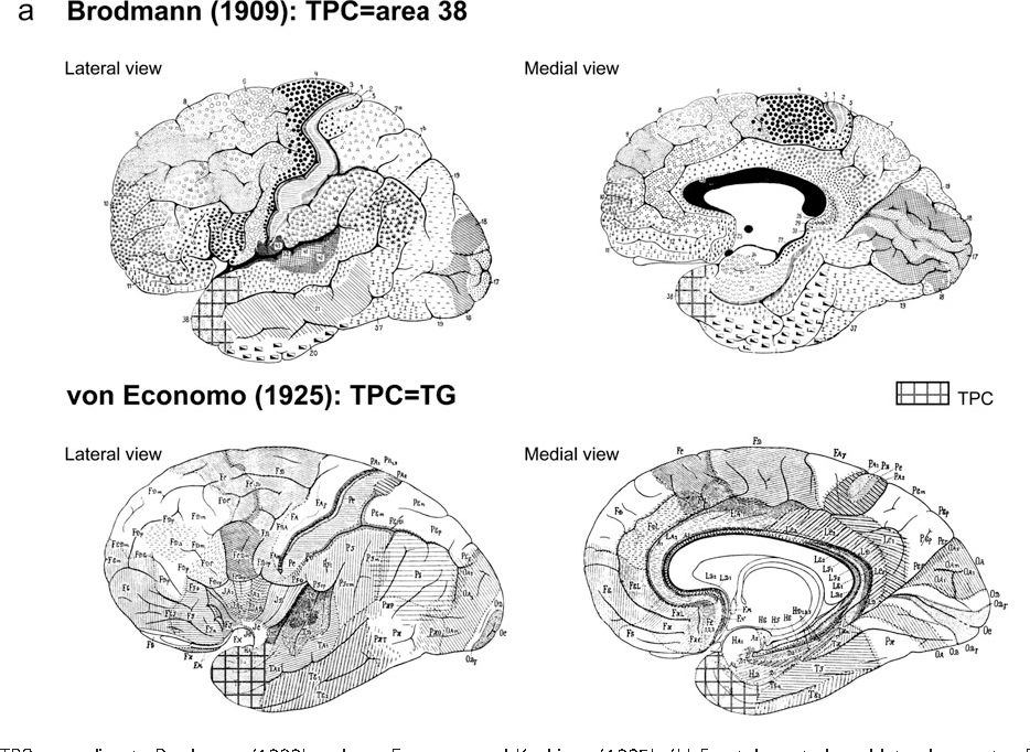 Figure 1 from The Human Parahippocampal Region: I. Temporal Pole ...