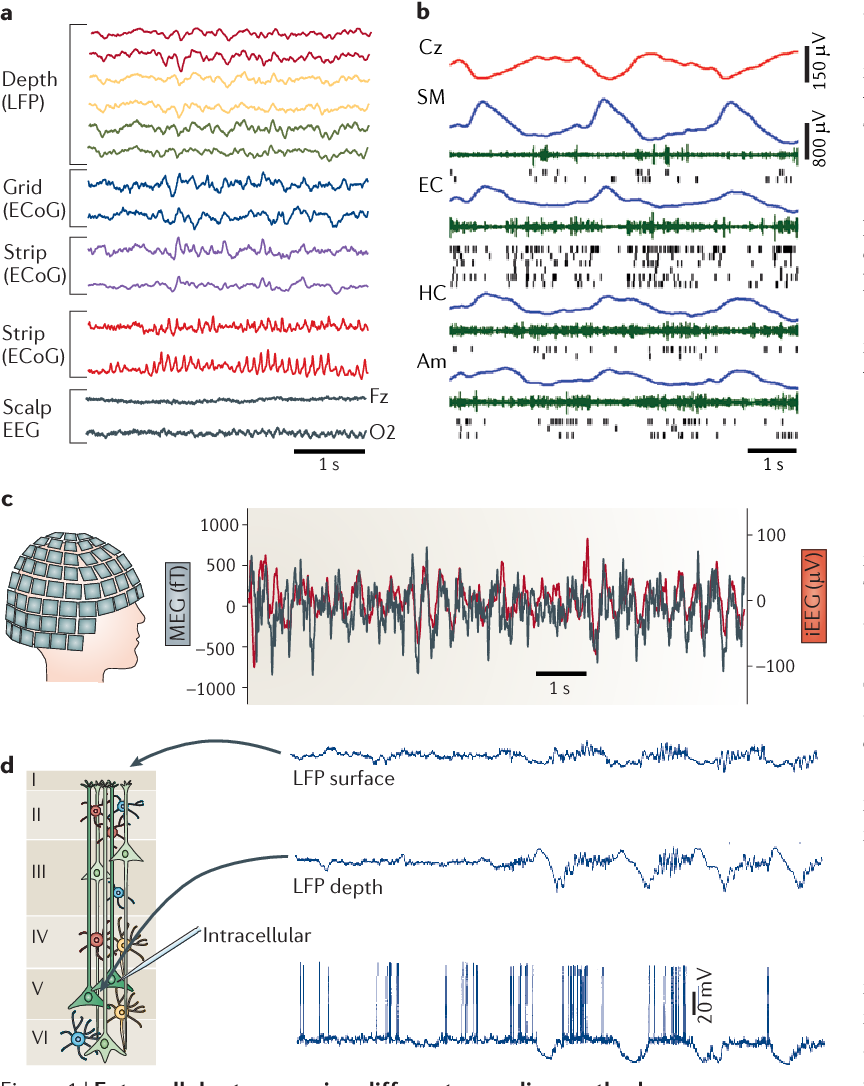 Figure 1 | Extracellular traces using different recording methods are fundamentally similar. a | Simultaneous recordings from thre d pth electrode (two selected sites each) in the left amygdala and hippocampus (measuring the local field