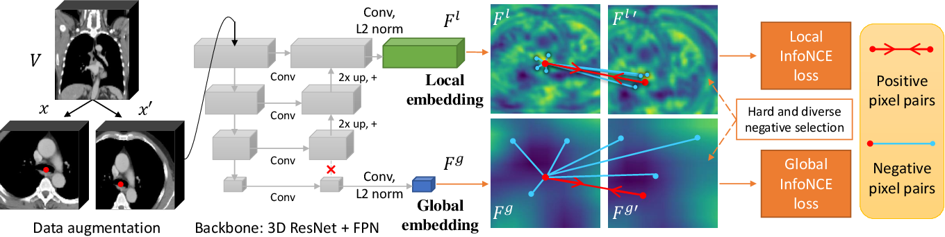 Figure 3 for Self-supervised Learning of Pixel-wise Anatomical Embeddings in Radiological Images