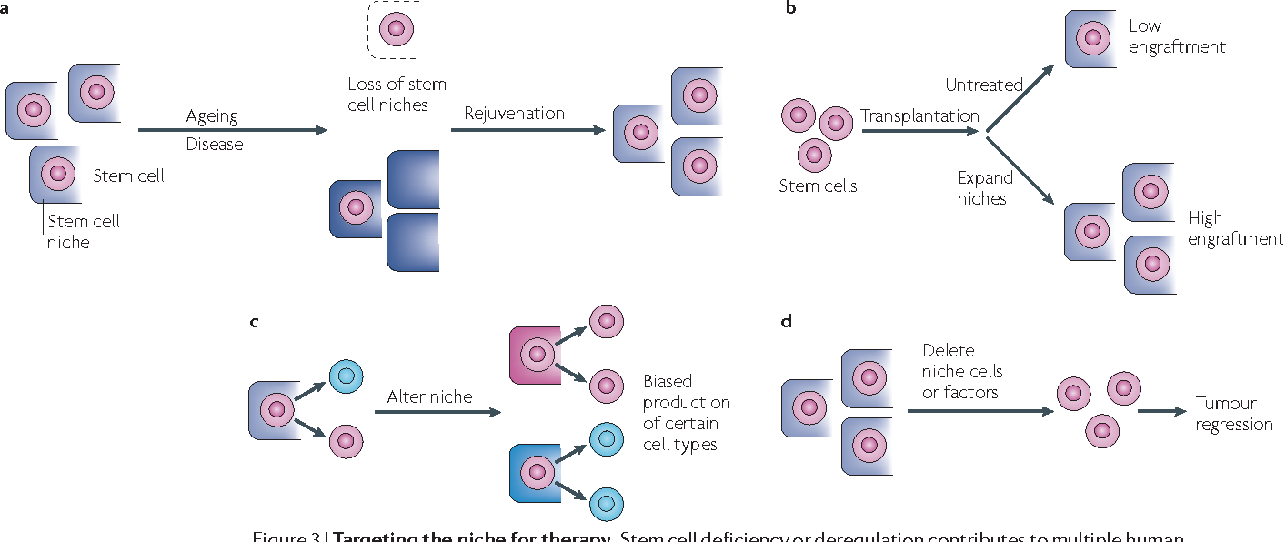 No place like home: anatomy and function of the stem cell niche ...