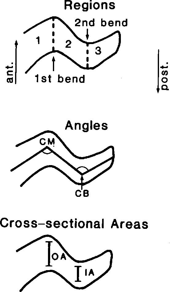 Anatomy and orientation of the human external ear. - Semantic Scholar