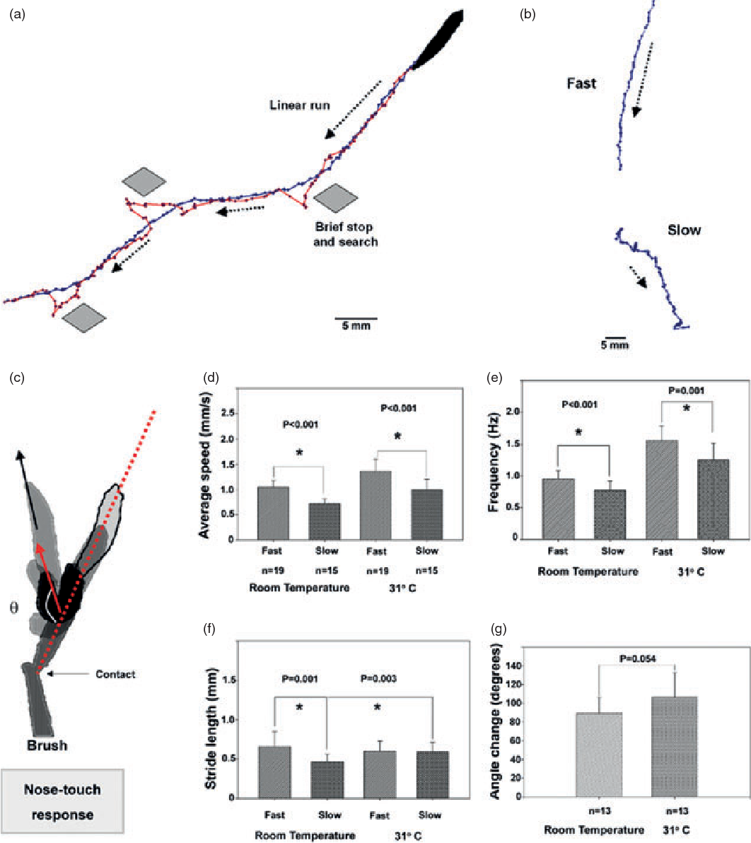 Silencing synaptic communication between random interneurons during ...