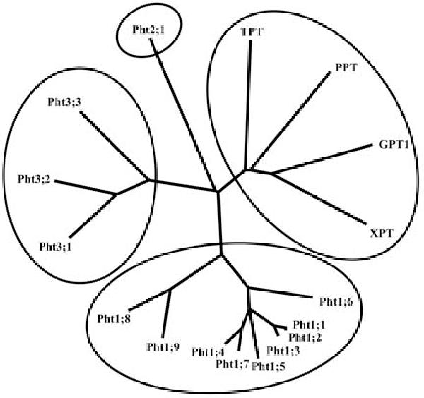 Figure 4 From Phosphate Transport And Homeostasis In Arabidopsis