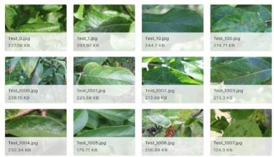Figure 1 for Identify Apple Leaf Diseases Using Deep Learning Algorithm