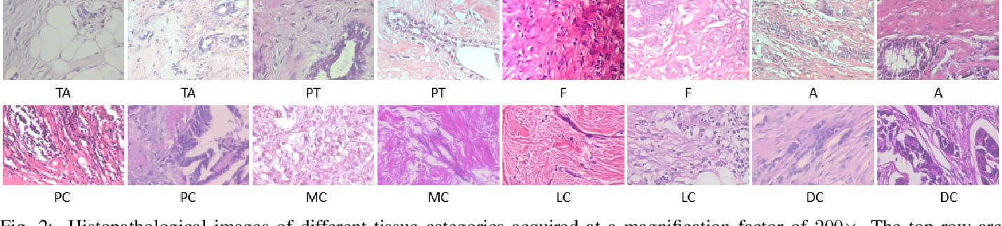 Figure 3 for Magnification-independent Histopathological Image Classification with Similarity-based Multi-scale Embeddings